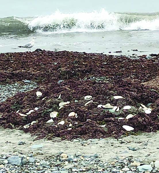 seaweed piles on the beach next to waves on shore